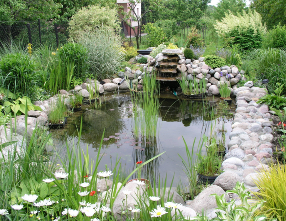 backyard ponds design in pasadena, md